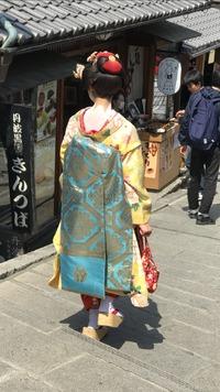 京都の花見❣️♪︎.。゚+.(*・ω・*)ノ。