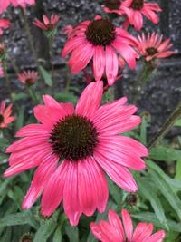 梅雨の庭花❣️(。^~^。)