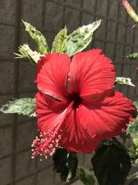 初夏の花❣️(。^~^。)