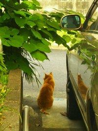 猫の通り道
