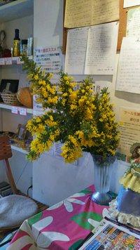 ミモザの花をいただきました!