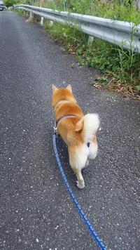 散歩日和だよん!!