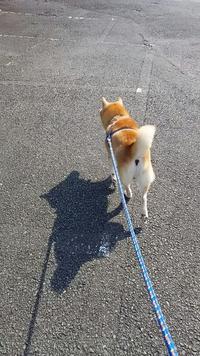お散歩日和になってキタァー!!