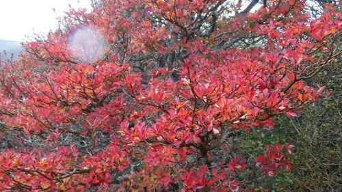 法華院山荘泊まりで紅葉の三俣山、大船山
