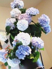 硝子と紫陽花