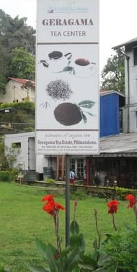 スリランカⅣ・・・紅茶畑①