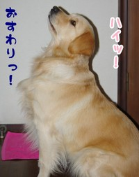 かしこい犬 CM