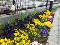 春の花壇情報!