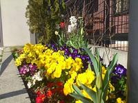 春の花壇 草むしり^^