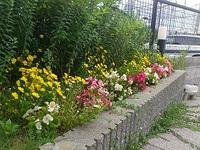 花壇の植え替え 夏編