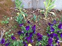 もうすぐ春ですね!チューリップw
