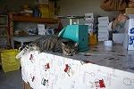 ぶどう園の看板猫