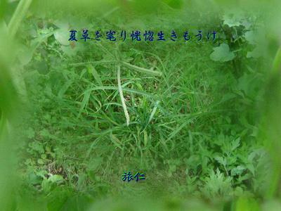 フォト575『 夏草を毟り恍惚生きもうけ 』tr2103