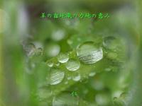 『 草の露地蔵の力地の恵み 』青のくさみ「森女」遊泳