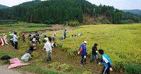 稲刈りシーズン到来。稲刈りボランティア大募集!9月30日(土)10月1日(日)