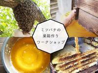 5/20(日)、巣箱orはちみつ付き◎天神でミツバチを育てよう!養蜂のお話&巣箱作りワークショップ