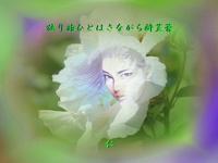 『 独り旅ひとはさながら酔芙蓉 』妄恋575交心vq2310