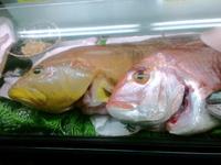 天然鮮魚のみ!