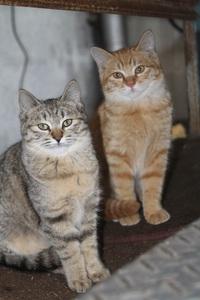 くろすけの保護猫活動 ウミ・ソラ