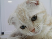 妊婦さんとネコとの同居について