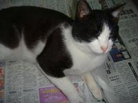 新聞も空気も読めない『猫のノラ』