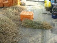 完全無農薬米の稲わらの行方『藁苞納豆』