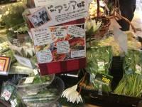 福岡の量販店ボンラパス