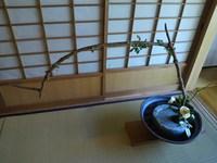 樹庵の花会