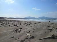 浜辺の清掃・・・?