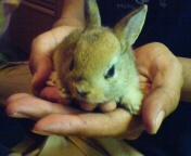 じぃちゃんのウサギ