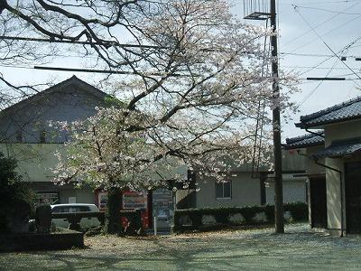 速玉神社の桜