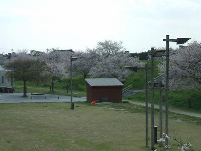 宮の公園の桜が市民を楽しませてくれる