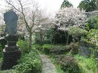 生目神社の桜の木