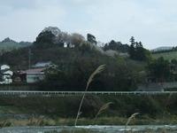 立花町の山に見える桜の花
