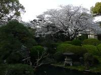 久留米・翠香園の桜
