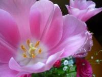 可愛い春の花。