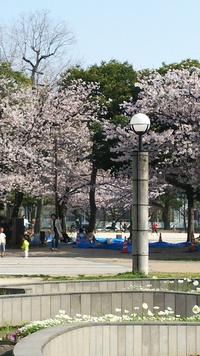 ⭐️桜⭐️