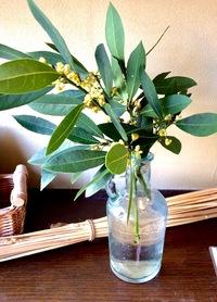 月桂樹とラナンキュラス