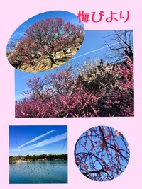 梅から桜へ…春の訪れ間近