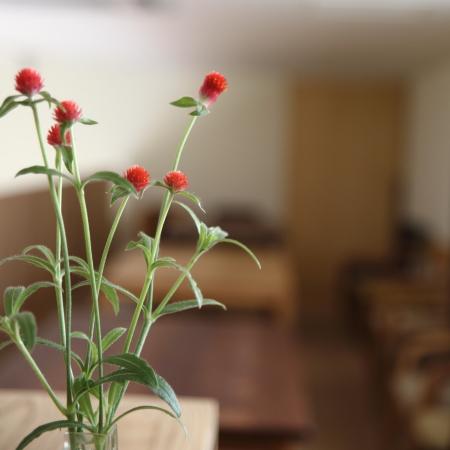 庭の千日紅を花瓶にいけました♪