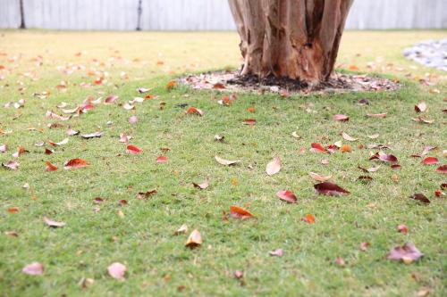 落ち葉も情緒があります。。