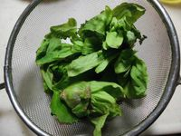 山菜の季節スタート