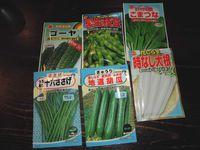 夏野菜の種まき