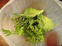 春の草摘み・山菜