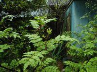 木の芽山椒