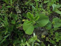 夏の豆類、発芽は順調
