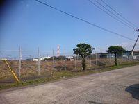 ノイバラの大株、伐採