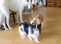 成犬サイズ