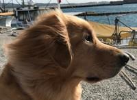 風と    犬