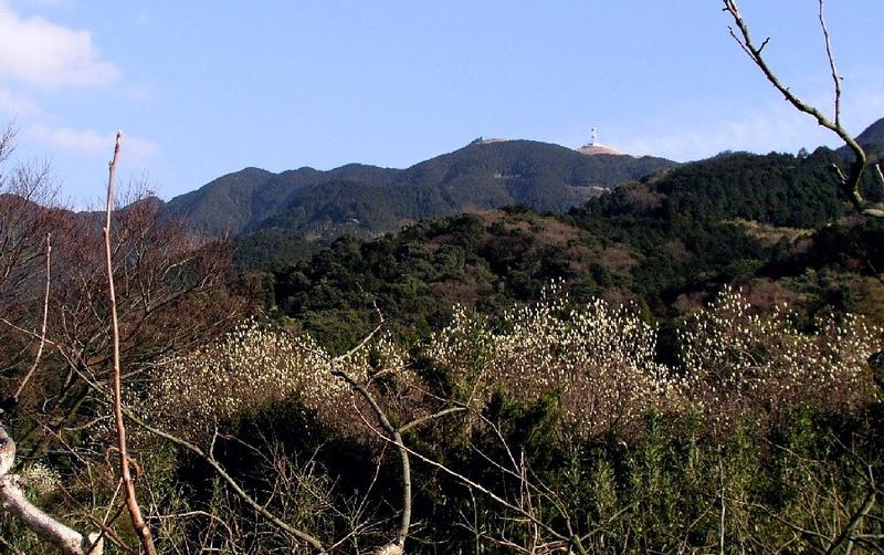 コブシと耳納山